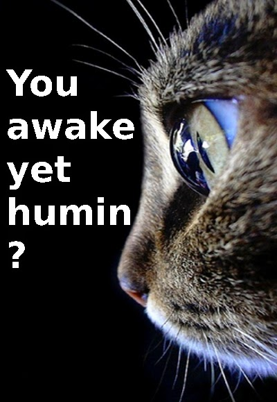 meme of cat in the morning