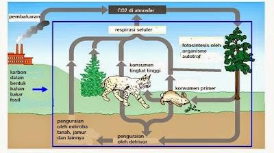 daur karbon