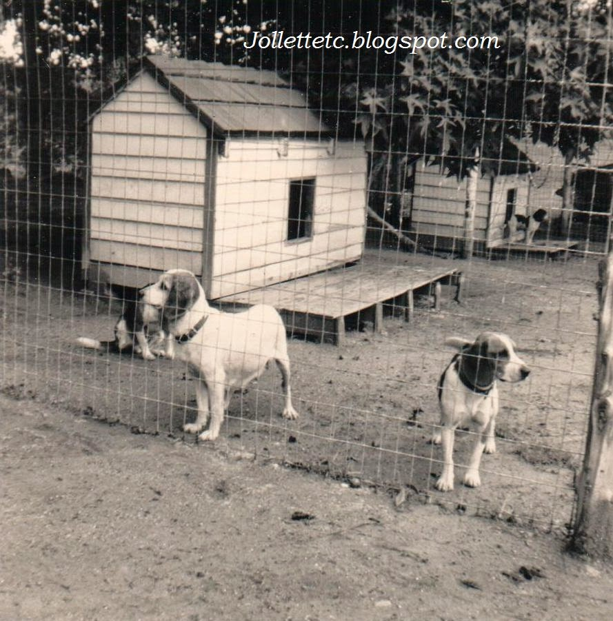 Fred Slade's kennel of hunting dogs  http://jollettetc.blogspot.com