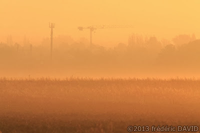 matin brume silhouette campagne champs ville grue Sénart Seine-et-Marne