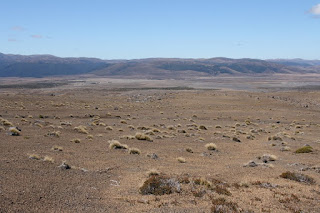 Desert Plateau, North Island New Zealand