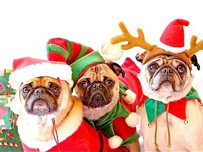 Funny Christmas pugs: Santa, Elf and Deer.