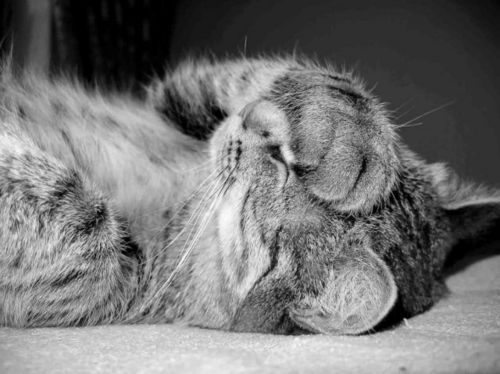Katzen schämen sich für Akif