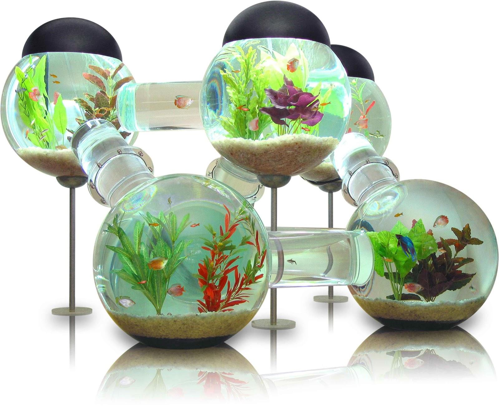 Franmagacine un acuario diferente para peces tropicales for Temperatura para peces tropicales acuario