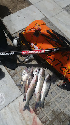 Gran día de pesca este verano 2015