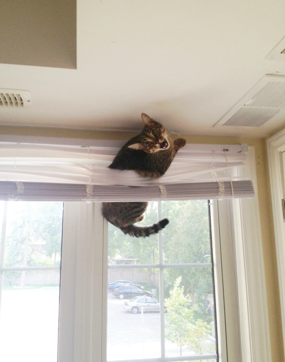 funny cats pictures, cat trapped in window