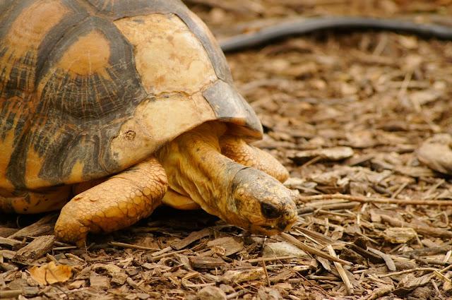 stock photo turtle