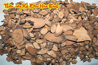 XA+DEN+33 Bán Chi Liên, Bạch Hoa Xà Thiệt Thảo Cây thuốc quý trị U Bướu