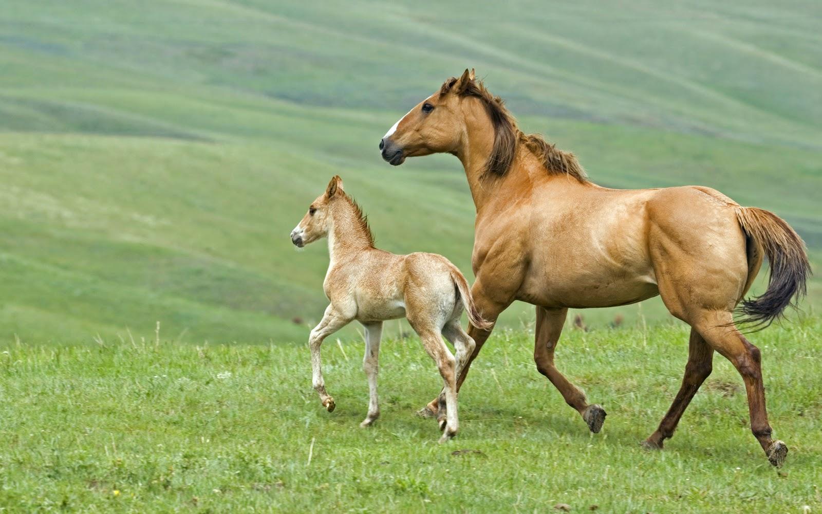 Simple   Wallpaper Horse Flicka - Horses+Wallpapers+1920x1200-1  Pictures_488160.jpg