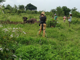 olifant conflicten rond het Udawalawe National Park, Sri Lanka