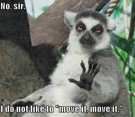 no sir riot kitty february 2012