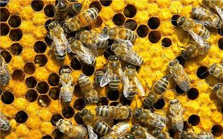 мед в лечении ВСД