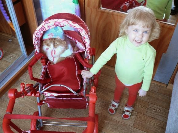 Кот в коляске