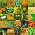 Alimente care protejează organismul