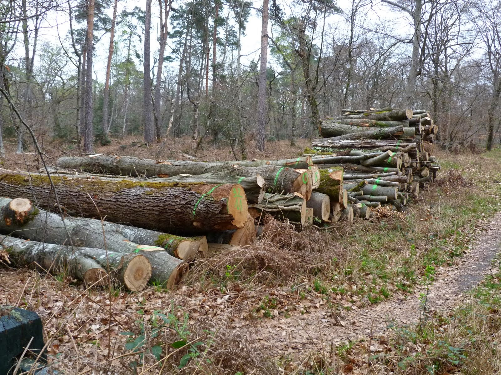BLEAU : Une forêt de Production