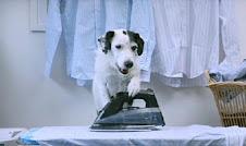 Ο σκύλος που κάνει όλες τις δουλειές!