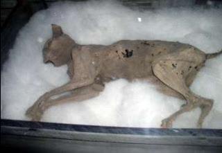 The mummified remains of 'Sentinel' the ghost cat was found in the Fairport Harbor Lighthouse in 2001