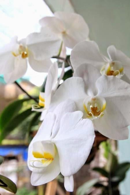10 loài hoa phụ nữ yêu thích nhất 1