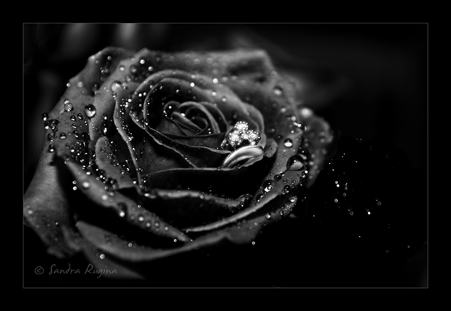 Black rose meaning- 5 Stars