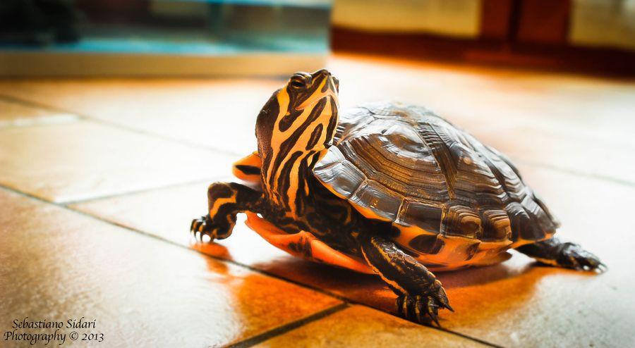 19. Ruga, the ninja turtles! by Sebastiano Sidari