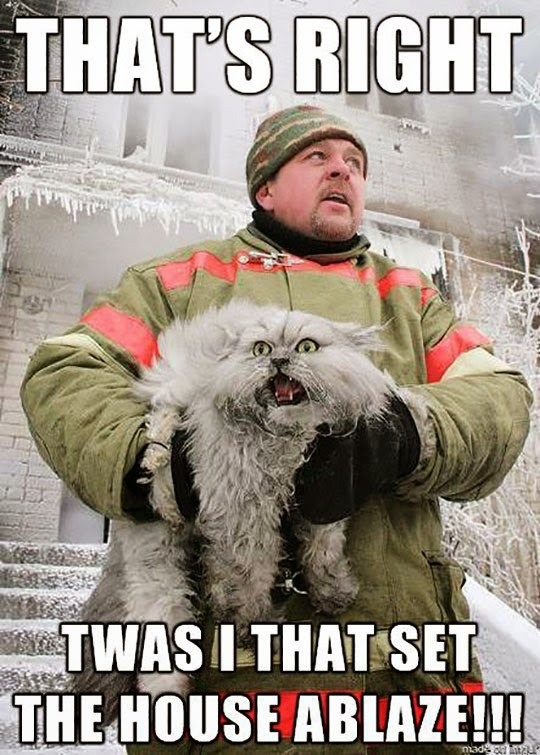 funny firefighter cat rescue screaming can we have a new witch ours melted wet cat wednesday