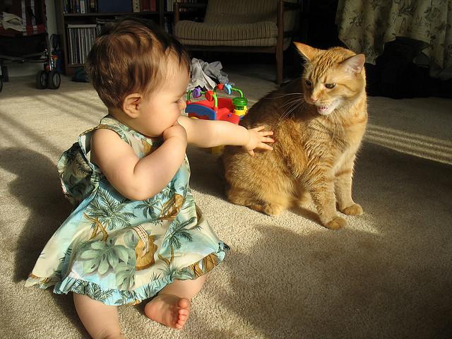 Ser madre y la confianza gato