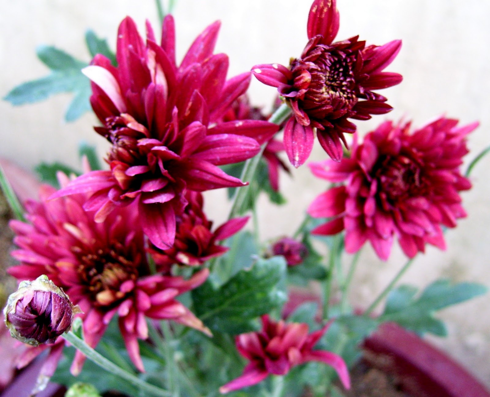 Bloom Few Flowering Plants In My Garden