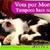 Postulan a gato para la alcaldía de Xalapa