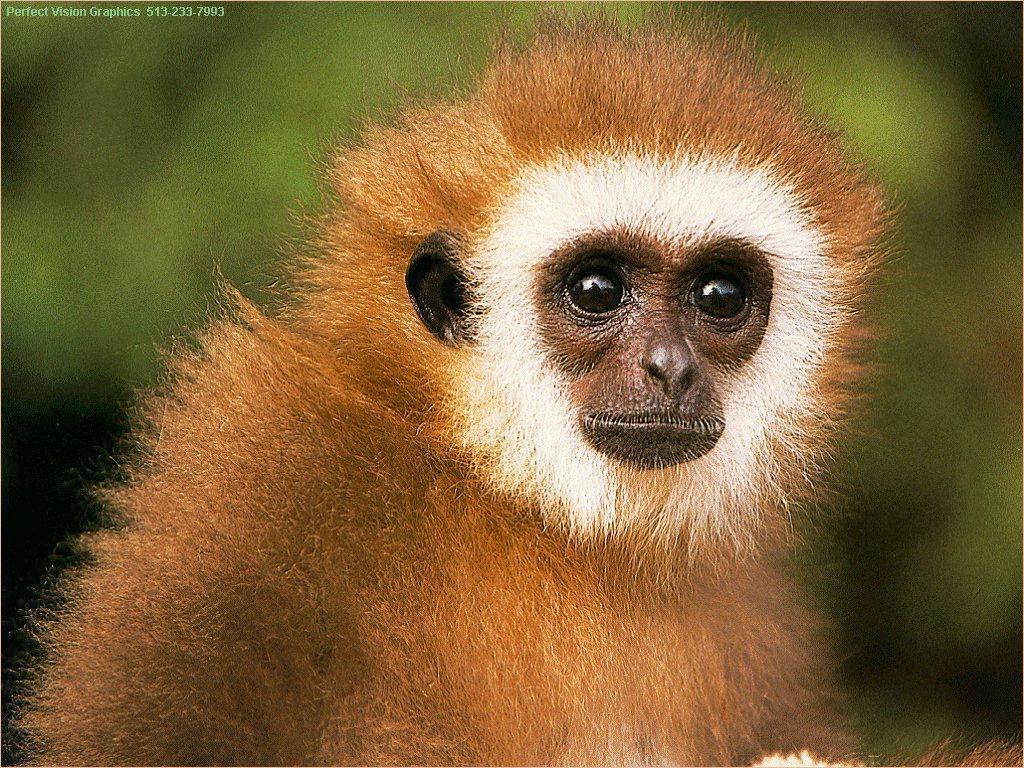 http://1.bp.blogspot.com/-5gqPA7U2M5U/T5hK520PSAI/AAAAAAAACIw/ADi3X61o2FE/s1600/monkey.jpeg