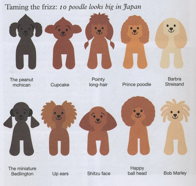Huxtable The Poodle Toy Poodle Blog Parti Poodle Japanese Style