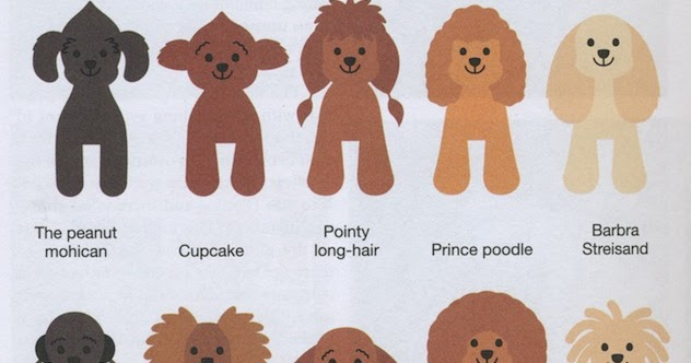Huxtable The Poodle