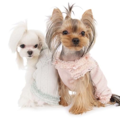 Размеры одежды для собак таблица