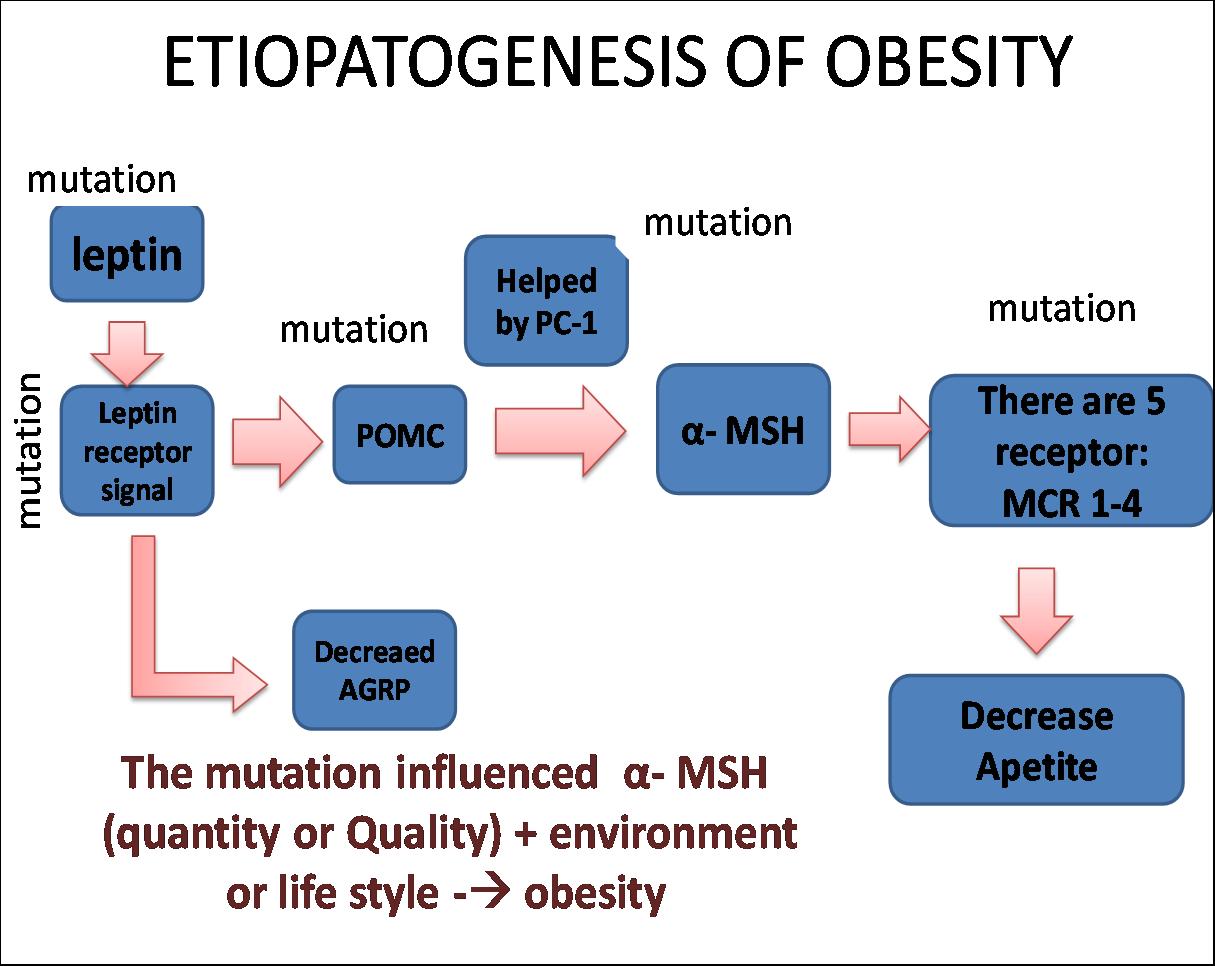 Obesitas (Kegemukan)