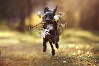Fotógrafa registra o brilho da alma dos cães em linda paisagens da Áustria