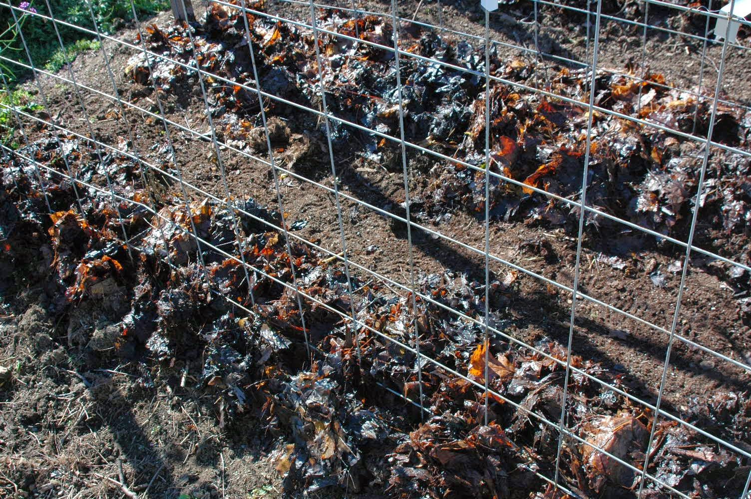 Roche Fleurie Garden: Tomato Support