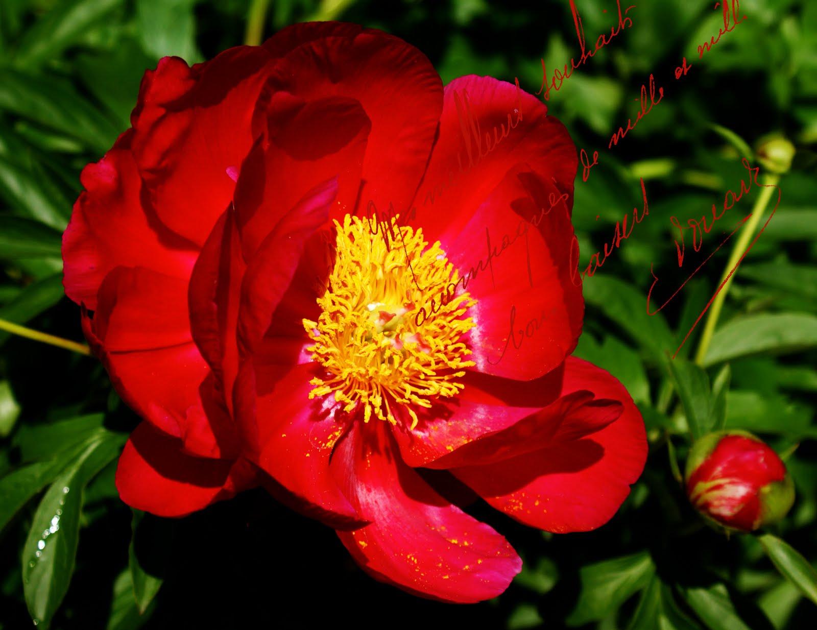http://1.bp.blogspot.com/-5i3ZHI5c-wQ/TfPvwundGBI/AAAAAAAAJNk/LlyxuhGmtUM/s1600/French+red+rose.jpg