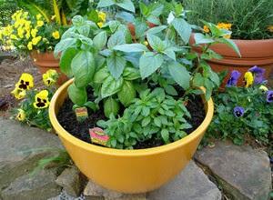 merawat-tanaman-agar-subur