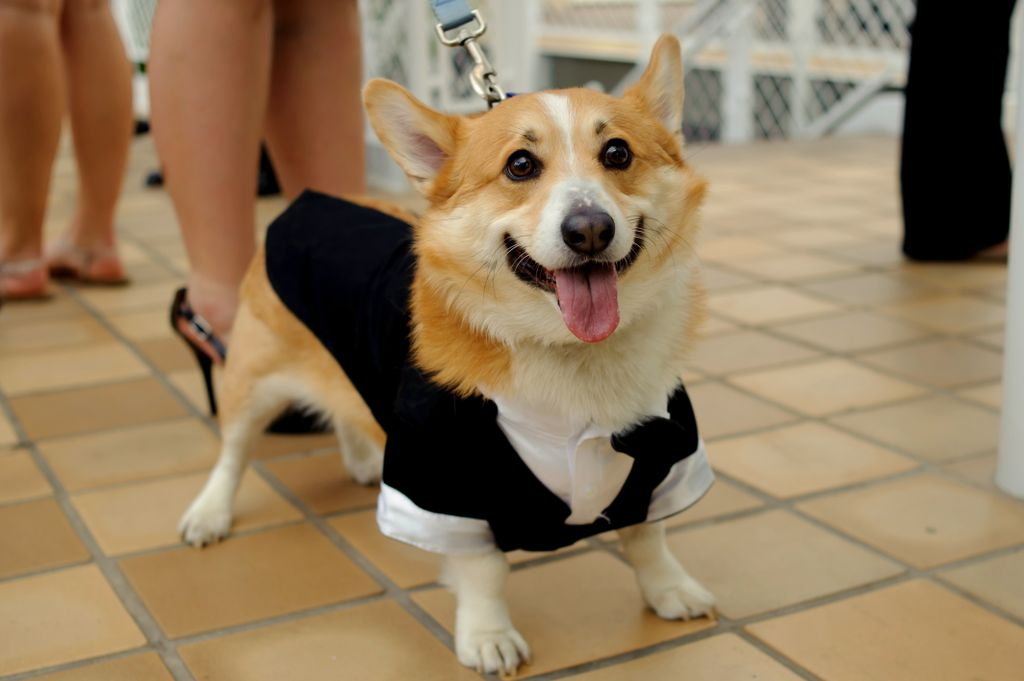 Prairie Dog Pet Costume