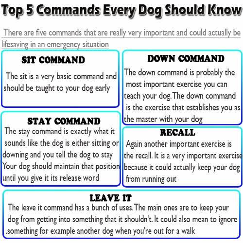 Dog Training Basic Commands Video