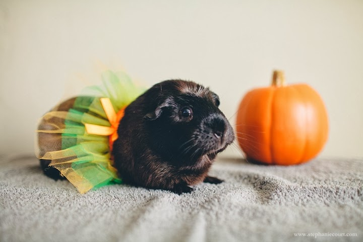 guinea-pig-ballerina-costume