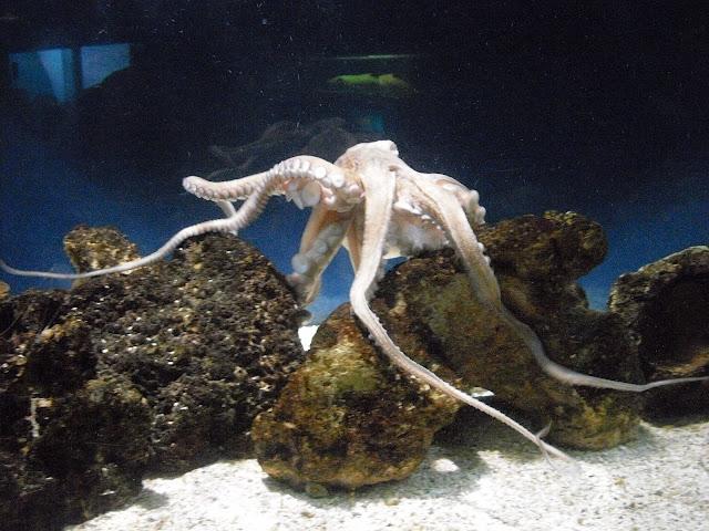 """Foto tirada no aquário """"Acqua Mundo"""""""