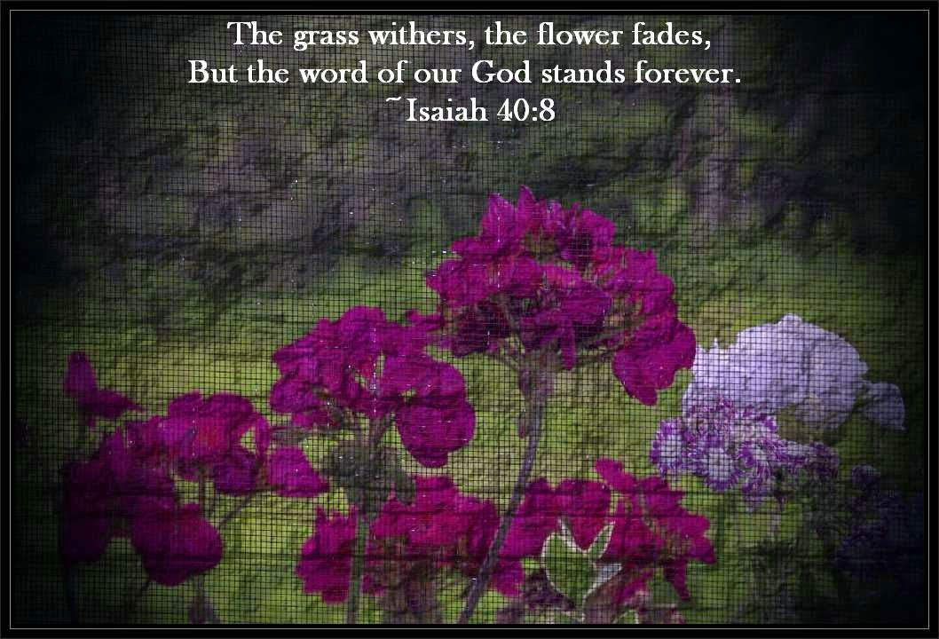 Flowers Bible Scripture Scripture Verse Flowers And