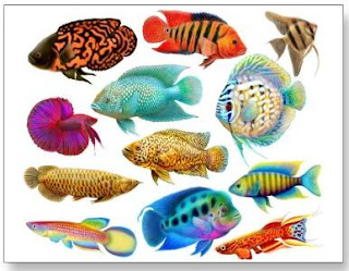The most exotic freshwater fish breeds the cozy pet blog for Best freshwater aquarium fish combination