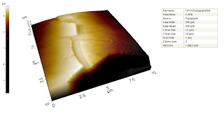AFM scan of a hedgehog quill