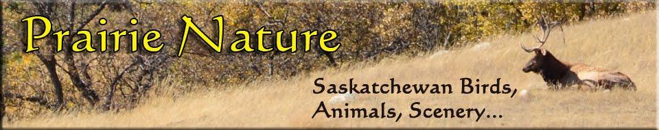 Prairie Nature