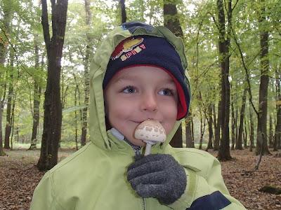 grzyby w październiku, grzybobranie w październiku, grzyby w Puszczy Niepołomickiej, czubajka gwiaździsta,czubajka gwiaździsta (Macrolepiota konradii