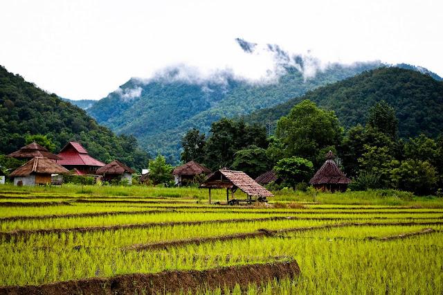 Vegan and vegetarian food in Thailand