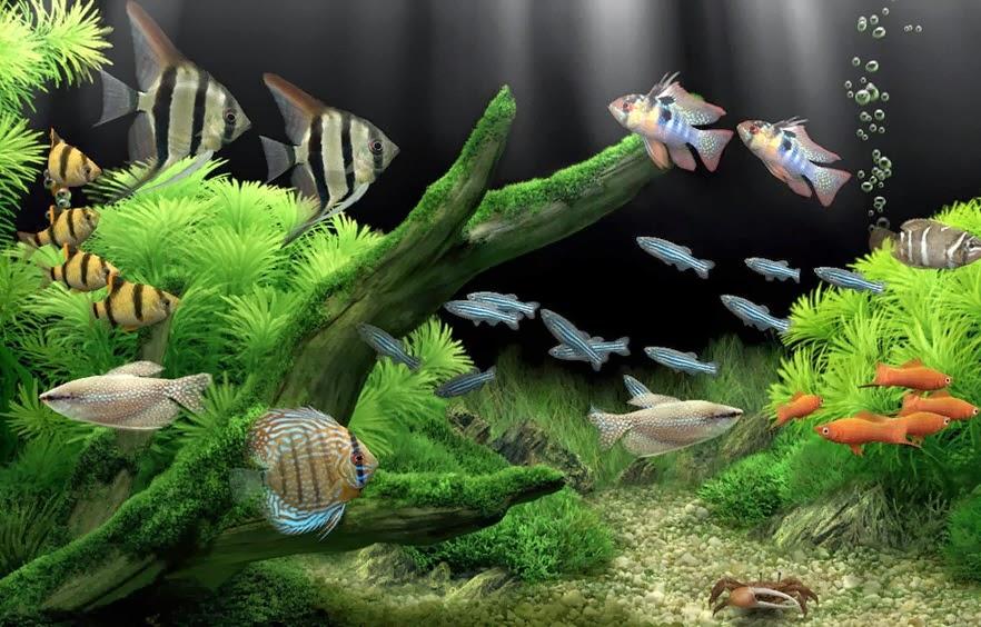 плавающие рыбки на рабочий стол