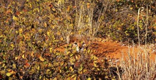 Best Animal Camouflage Picture  - Camouflage Animals