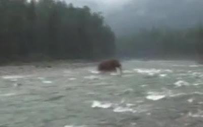 filman mamut en siberia rusa